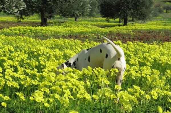 Allevamento Dalmata e pensione cani tutte le taglie Cosenza id.