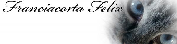 Allevamento del gatto siberiano Franciacorta Felix Brescia - Annunci Zampettando